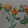 Succulent flowering in garden room....