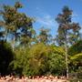 Flamingos and Caryota urens and gigas - Fishtail Palms, and Giant Fishtail Palm (Caryota urens and gigas - Fishtail Palms)