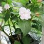 Copy_of_garden_098