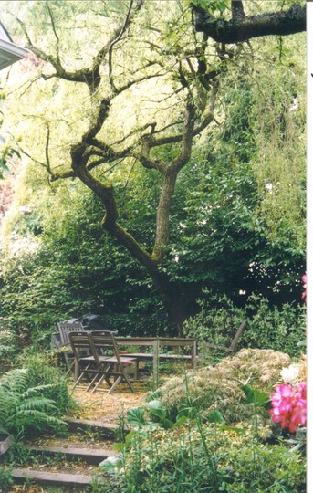 Our patio sheltered under the willow tree