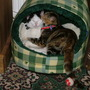 Jack & Tilly