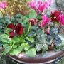 Green_pot_replanted