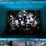 Compost Newsflash