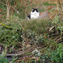 Moz on top of my bonfire waiting for bonfire night tomorrow!...a274