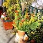 Autumn displays on the terrace