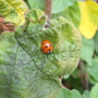 Ladybirds still around.......