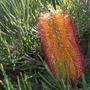 Quail_botanical_gardens_11_02_10_60_