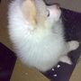 MY LITTLE PUPPY  ROBO