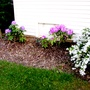 Deutzia and rhododendron