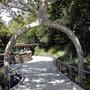Amazing_tree3