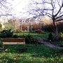 View across my garden