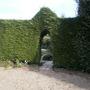 Leylandii Arch