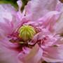 Poppy_2008