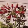 ? Beautiful flower