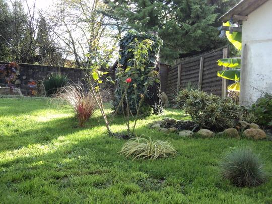 Grasses  (Carex oshimensis (Sedge))