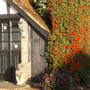 Front 'Pyracantha' (Pyracantha)