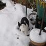 Suki and the snow