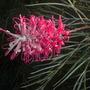 Cuyamuca_botanical_gardens_11_26_10_72_