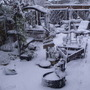 """Part of our """"Pirate"""" garden this morning."""