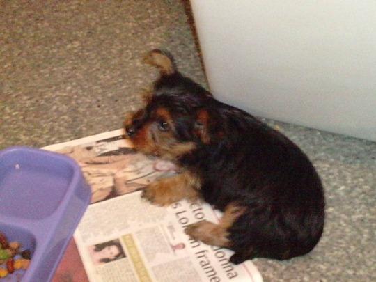 Mischa aged 8 weeks