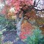Bodnant Autumn Colour 020
