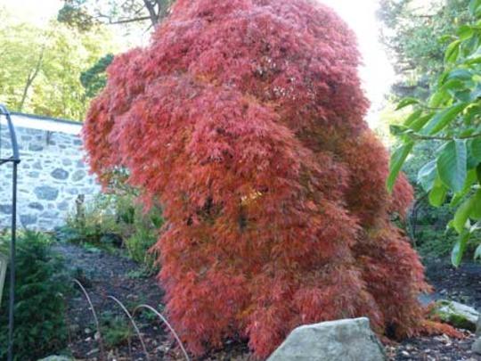 Bodnant Autumn Colour 021