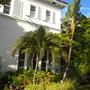 Strilitzia nocolai - Giant-bird-of-Paradise, Howea belmoreana - Sentry Palm (Strilitzia nocolai - Giant-bird-of-Paradise, Howea belmoreana - Sentry Palm)