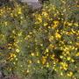 Cuyamuca_botanical_gardens_11_26_10_66_