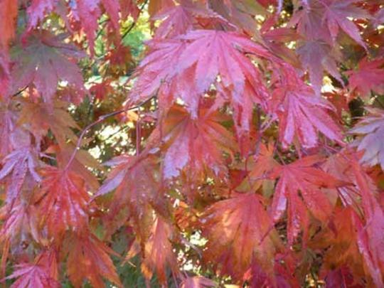Bodnant Autumn Colour 039