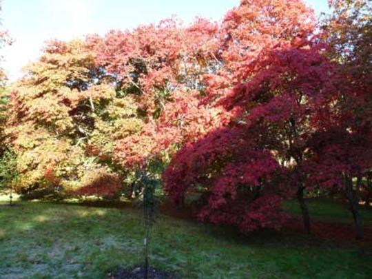 Bodnant Autumn Colour 040