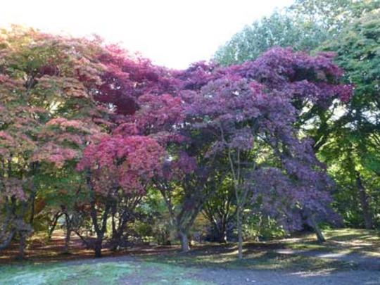 Bodnant Autumn Colour 041