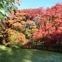 Bodnant Autumn Colour 042