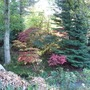Bodnant Autumn Colour 048