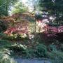 Bodnant Autumn Colour 053