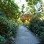 Bodnant Autumn Colour 070