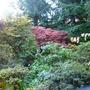Bodnant Autumn Colour 071