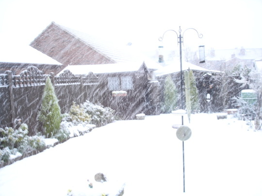 My back garden on a snowy day.