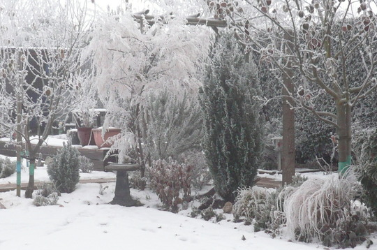 Frosty and Brrrrrrrrrrr cold