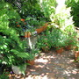 Early Summer in NE Downunder - a shady corner of my Courtyard Garden