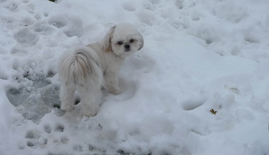 Pebbles in the Snow