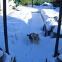 lucky plods through snow in allotment