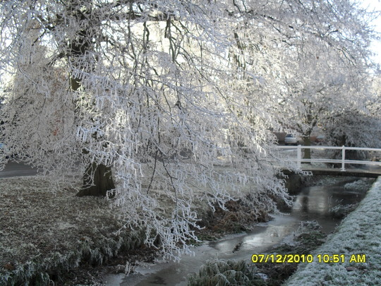 winter tree at the brook
