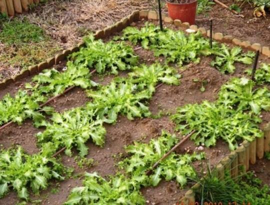 winter veg.