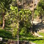Balboa_park_12_01_10_7_