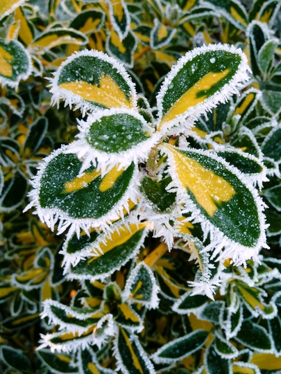 Mother nature making pretty Christmas decorations :o)