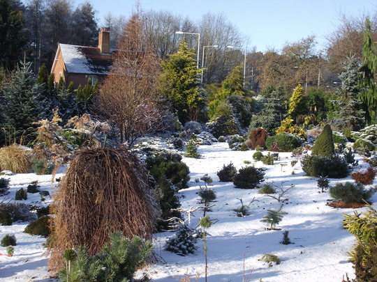 Foxhollow in the snow 1