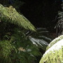 Tree ferns ... The Exotic Garden