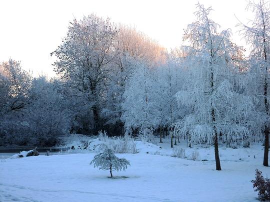 Icy, Snowy Garden