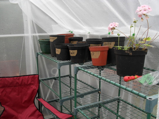 Staging in insulated greenhouse