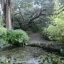 Knoll Gardens. Superb Eucalyptus trees.